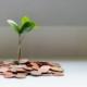 Eine Pflanze, die aus Münzen herauswächst
